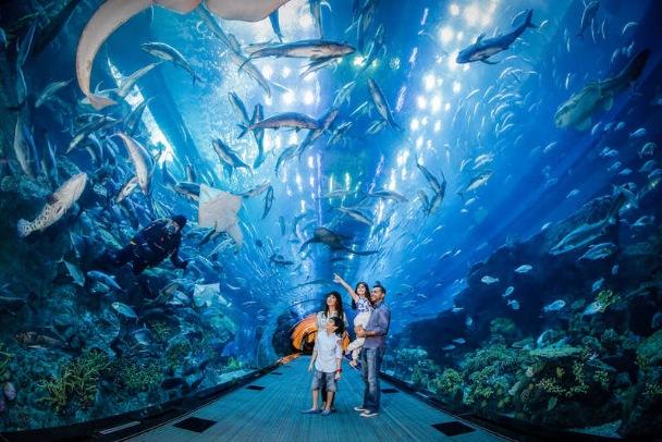 Visit Dubai Aquarium & Underwater Zoo