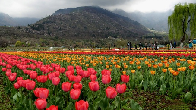 Visit the Indira Gandhi Memorial Tulip Garden
