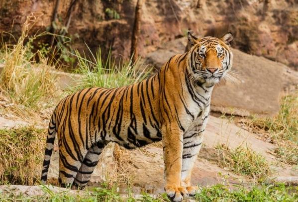 Wayand wildlife sanctuary - Second largest wildlife reserve in Kerala