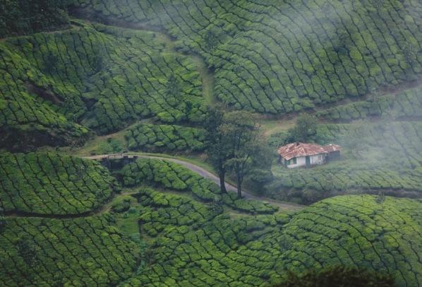 Must-do Activities on your Honeymoon Trip to Kerala