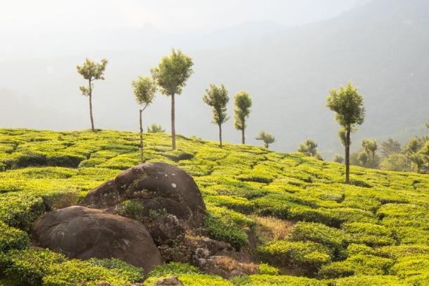 Top 6 Exquisite Honeymoon Destinations in Kerala