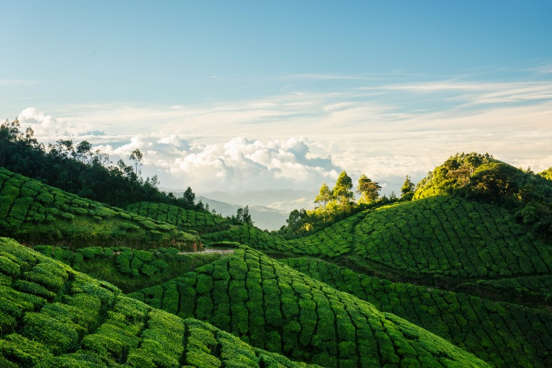 Munnar Honeymoon Packages - Cranberry