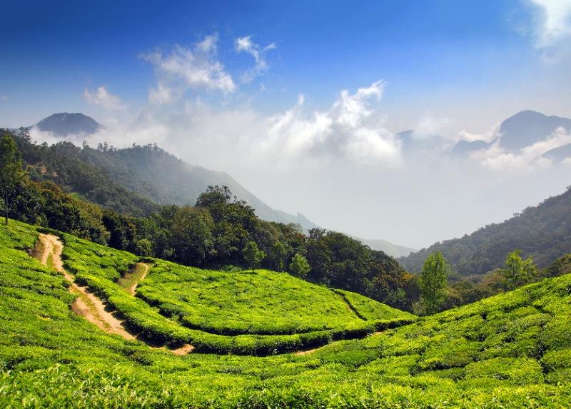 Kerala 5 nights 6 days Honeymoon Package