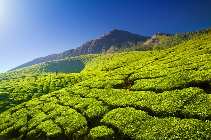 Kerala Honeymoon Packages from Surat