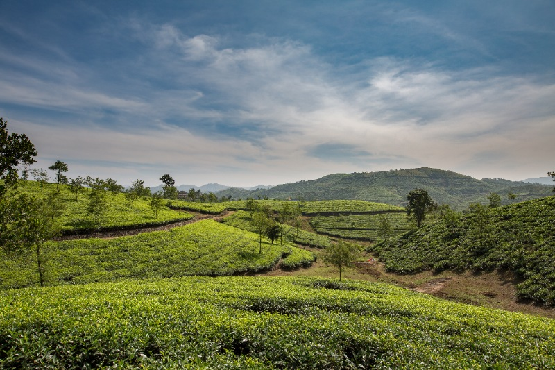Covid Care Munnar Tour Packages for Couple