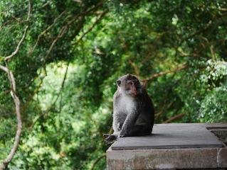 Bali sightseing