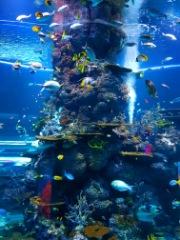 Visit Burj Khalifa & Dubai Aquarium