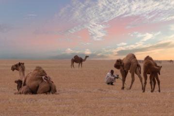 Desert Safari Visit