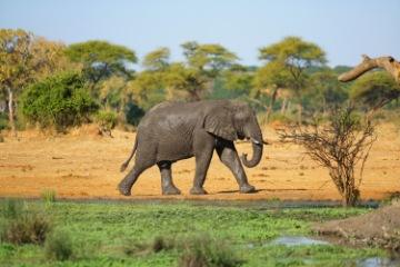 Visit Elephant Beach