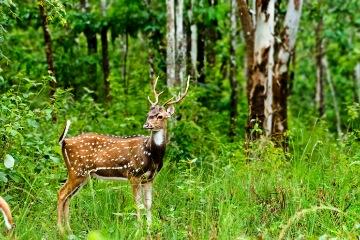 Munnar Sightseeing
